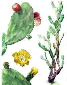 Nopal (Opuntia Ficus Indica)