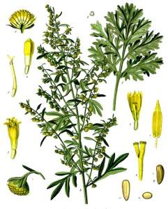 Absinthe (Artémiseae absinthium)