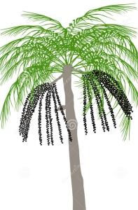 Açaï (baies) (Euterpe oleracea)